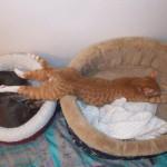 Soha ne akarj értelmet találni a macskák észjárásában! (képek)