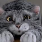 Négyballábas macska a legújabb kedvenc az új karácsonyi reklámban