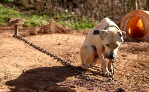 kutya-lánc